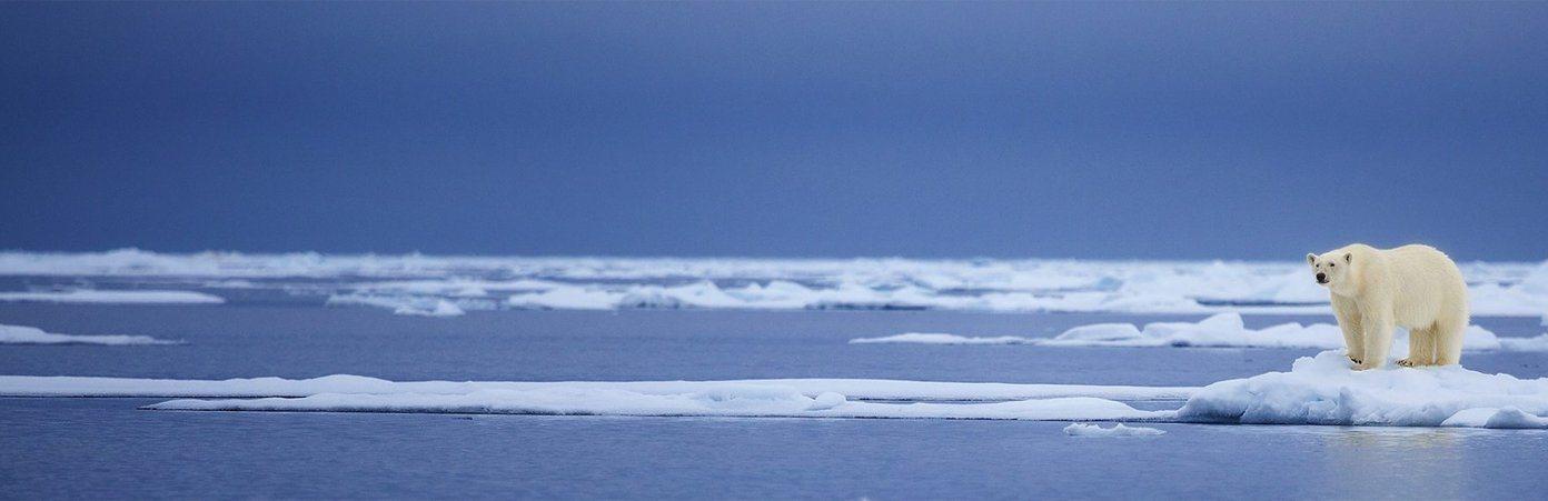 polar-bear-on-ice